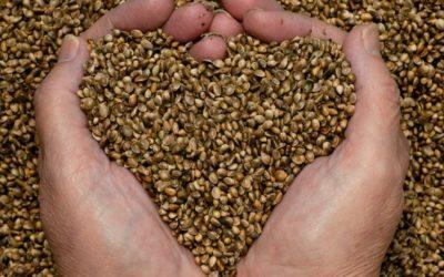 Żywność z konopi – Zdrowie i siła natury!