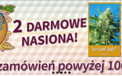 Promujemy Sweet Seeds – Darmowe nasiona dla zakupów powyżej stówki